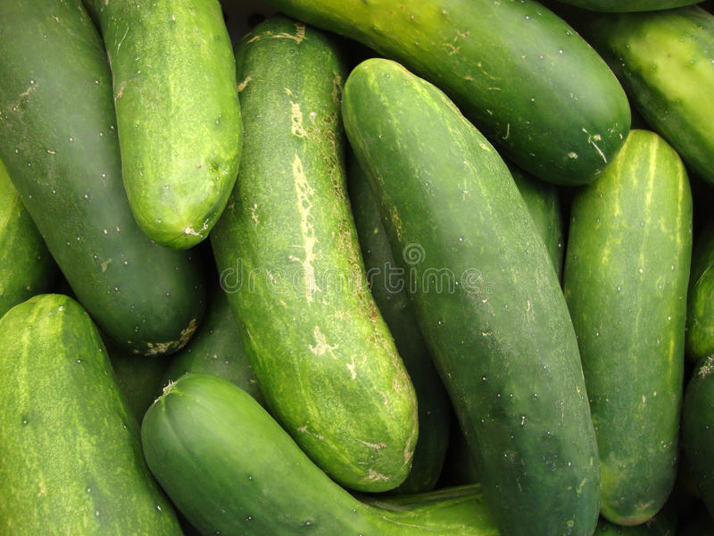 Macro of Cucumbers at Farmers Market royalty free stock photo
