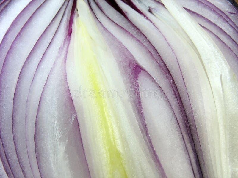 Macro of cut slised onion bulb