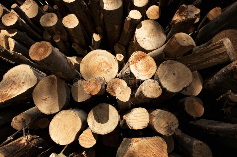 Macro of cut trees. Close up of stack of cut tree trunks with annual rings visible, distorted wide angle view royalty free stock photography