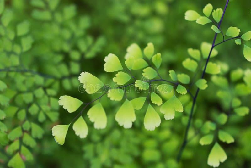 Macro détail des feuilles vertes d'une plante tropicale photographie stock