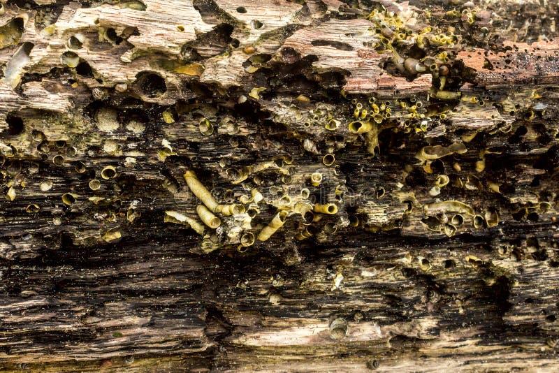 Macro détail des mollusques et crustacés sur le fond en bois parfait pour la conception, site Web, photos libres de droits