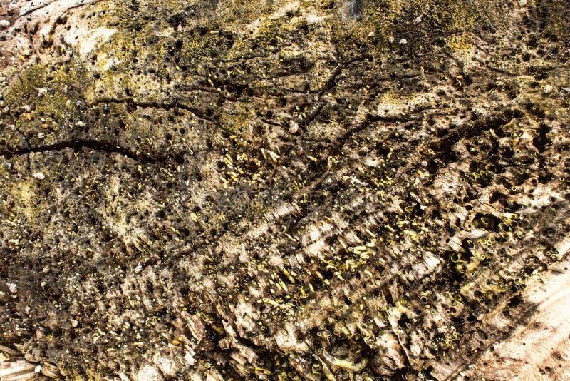 Macro détail des mollusques et crustacés sur le fond en bois parfait pour la conception, site Web, images libres de droits