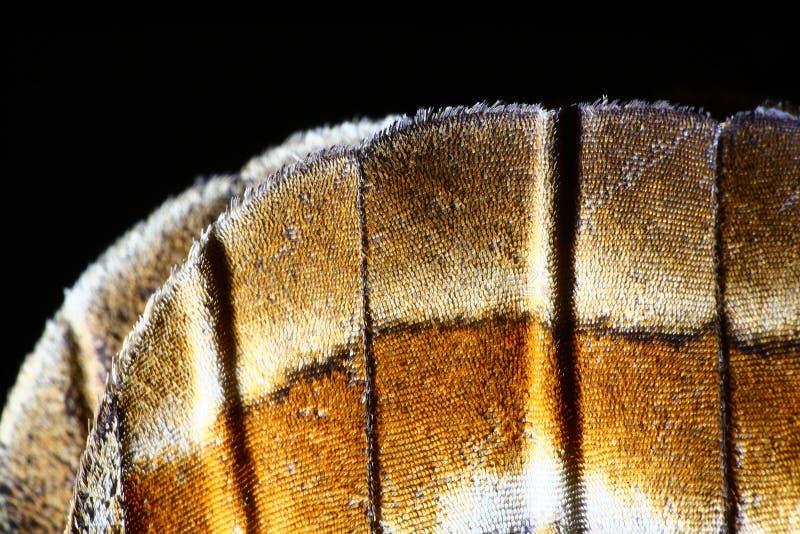 Macro détaillé d'aile de papillon image libre de droits