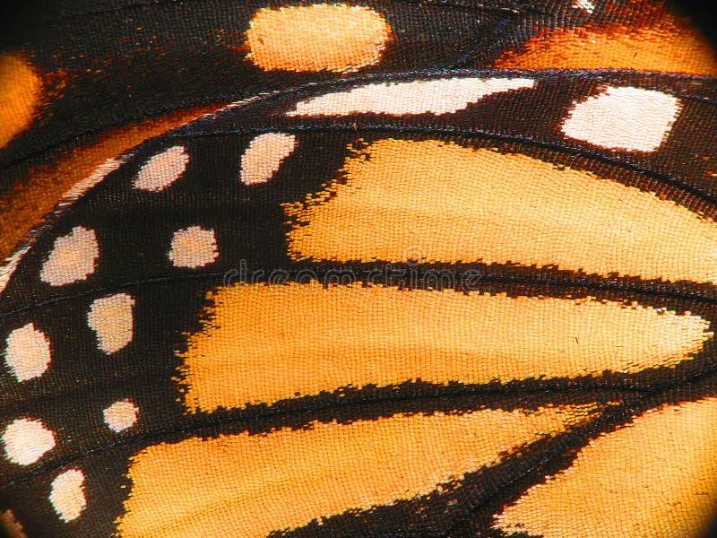 Macro d'aile de papillon de monarque photographie stock libre de droits