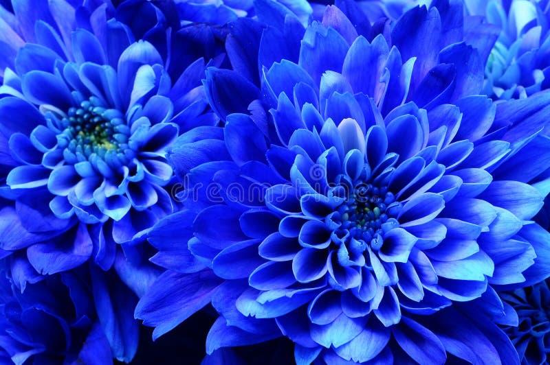 Macro d'aster bleu de fleur photographie stock libre de droits