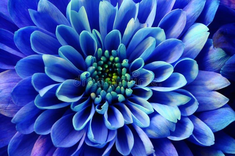 Macro d'aster bleu de fleur images libres de droits