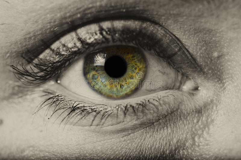 Macro d'isolement d'oeil vert de femme image stock