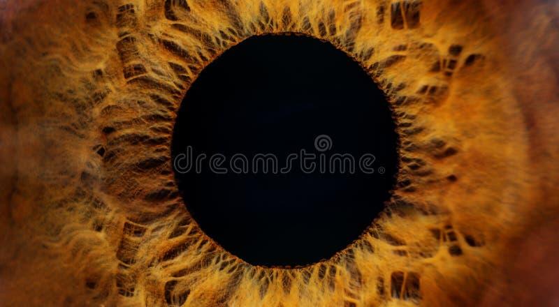 Macro d'oeil humain de Brown image libre de droits