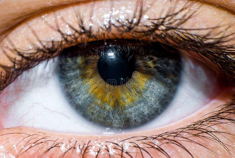 Macro d'un oeil humain photographie stock libre de droits
