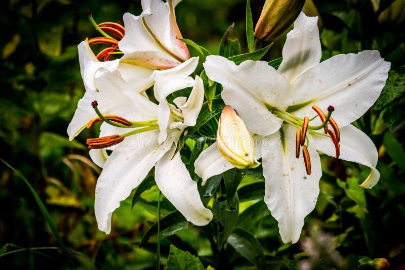 Fleur de ballon blanche image stock. Image du blanche ...
