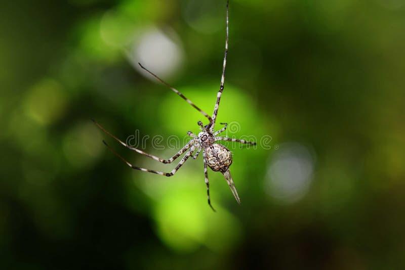 Macro da aranha imagem de stock royalty free