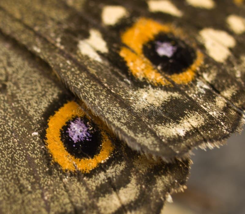 Macro da asa da borboleta foto de stock