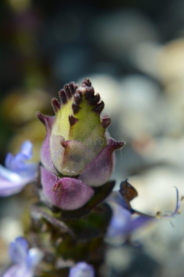 Macro da flor do cacto fotografia de stock royalty free