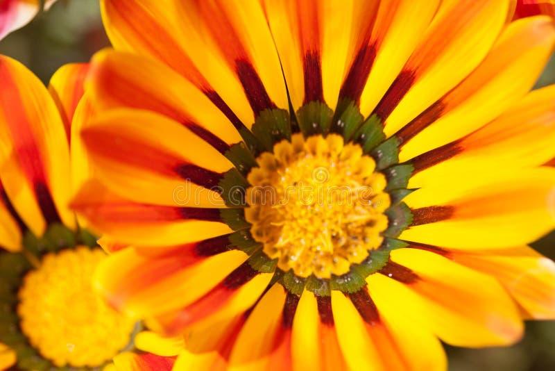 Macro da flor fotos de stock