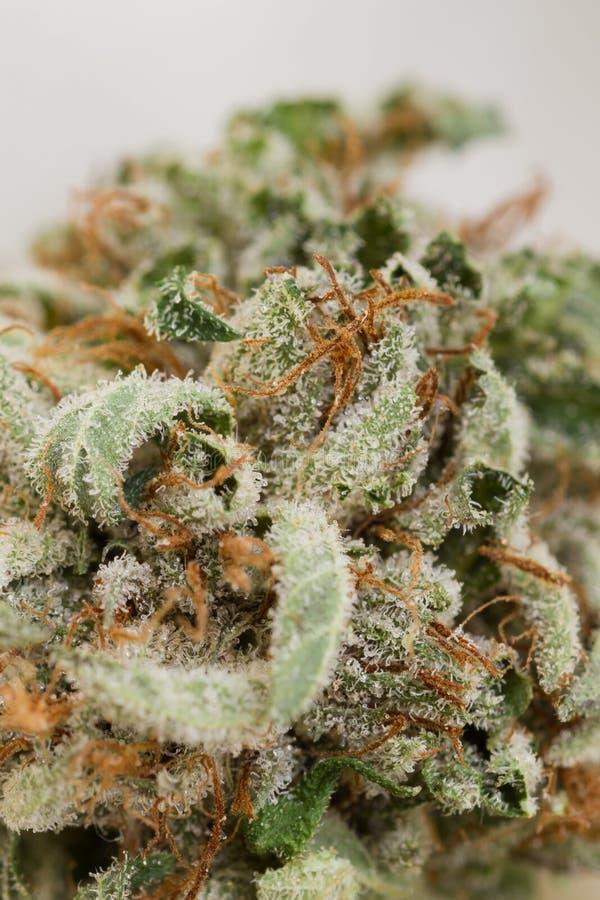 Macro da marijuana foto de stock royalty free