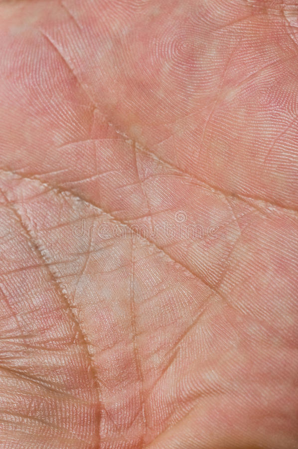 Macro da pele fotos de stock
