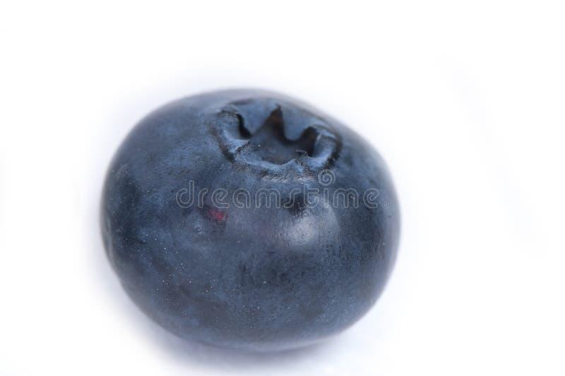 Macro da uva-do-monte foto de stock royalty free