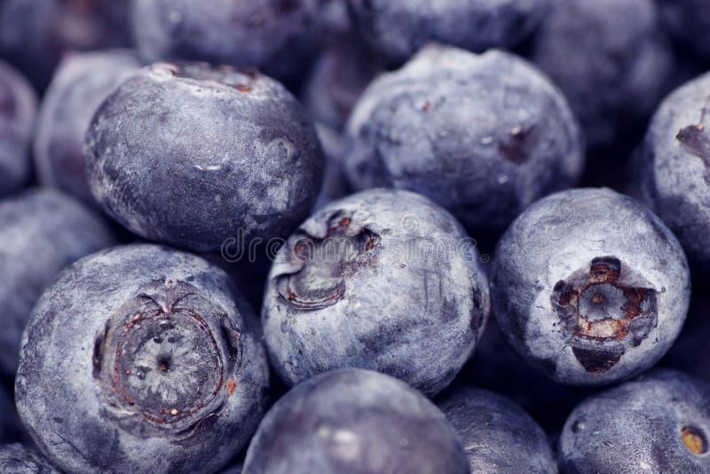 Macro da uva-do-monte fotos de stock