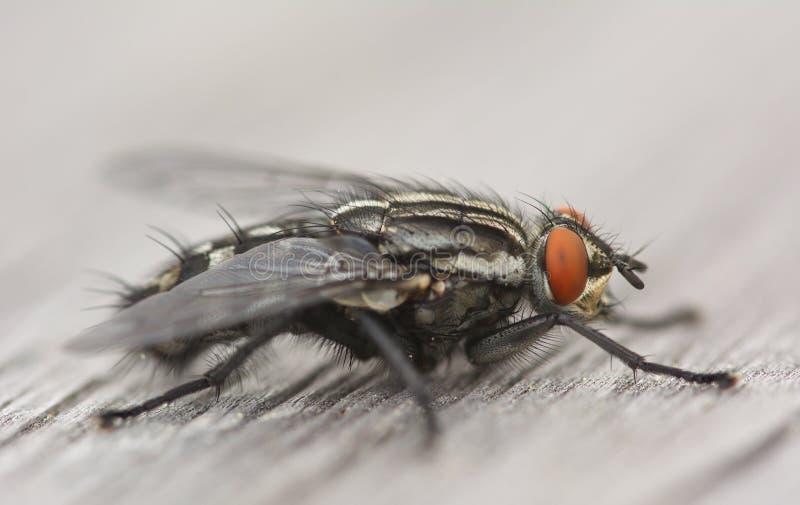 Macro de aardachtergrond van het vlieginsect royalty-vrije stock afbeelding