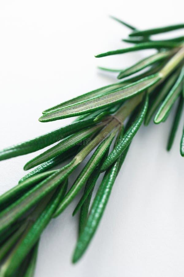 Macro de brin de romarin, épices aromatiques fraîches photo stock