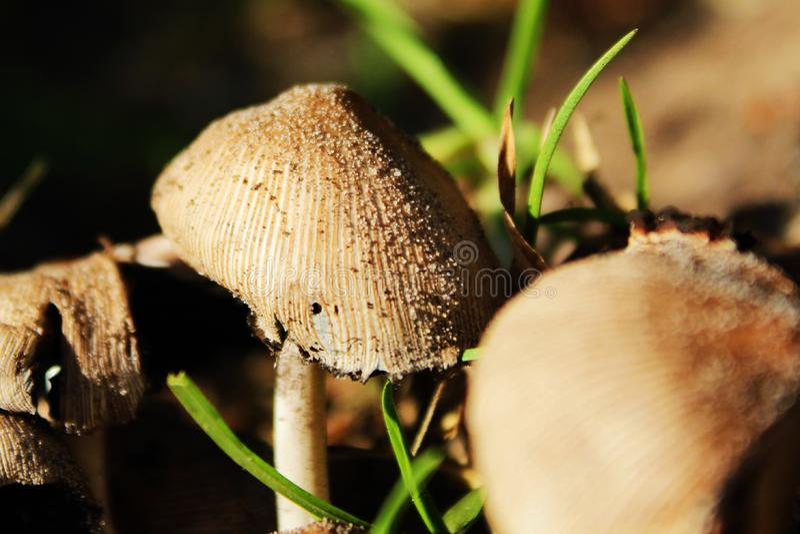 Macro de champignon images libres de droits