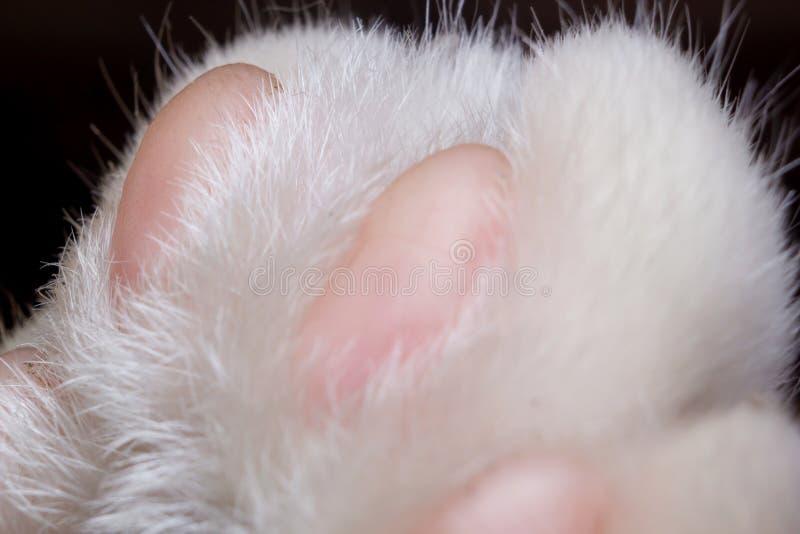 Macro de chat de pied photos libres de droits