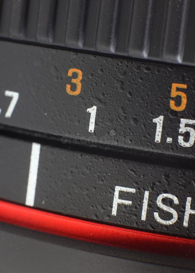 Macro de cristallin de poissons images stock