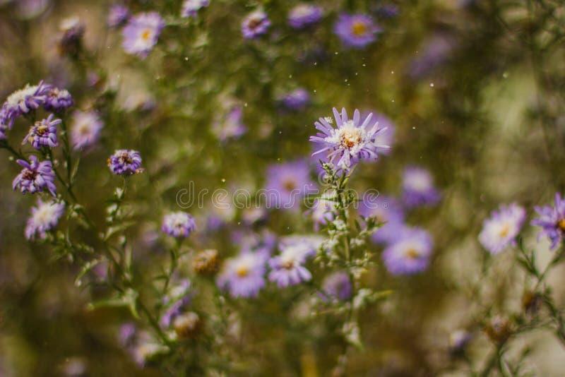 Macro de fleur couvert de neige photographie stock libre de droits