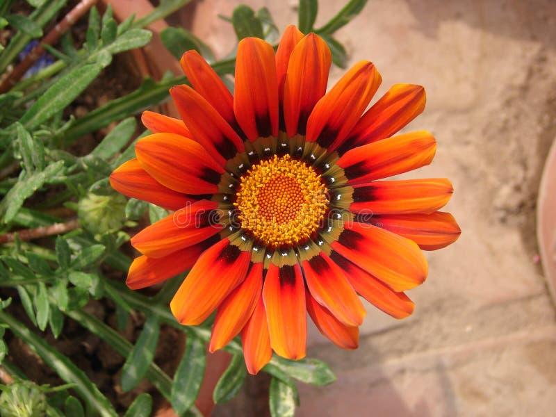 Macro de fleur images libres de droits