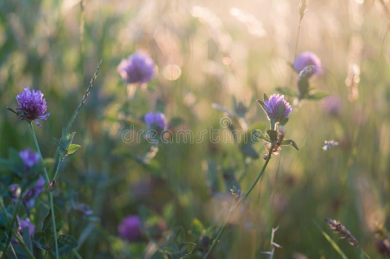 Macro de fleur pourpre photographie stock libre de droits