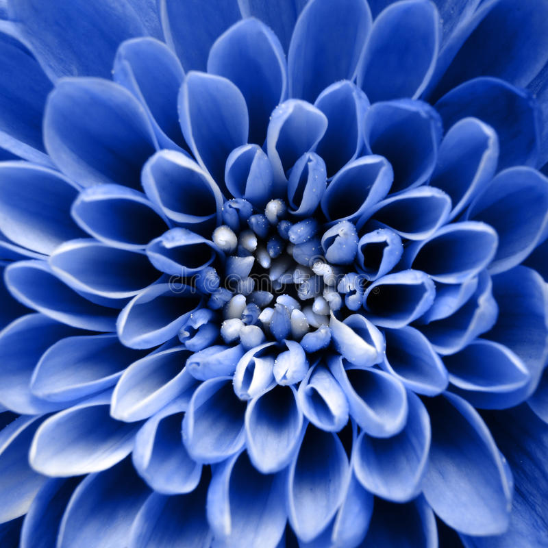 Macro de fond bleu de fleur images libres de droits