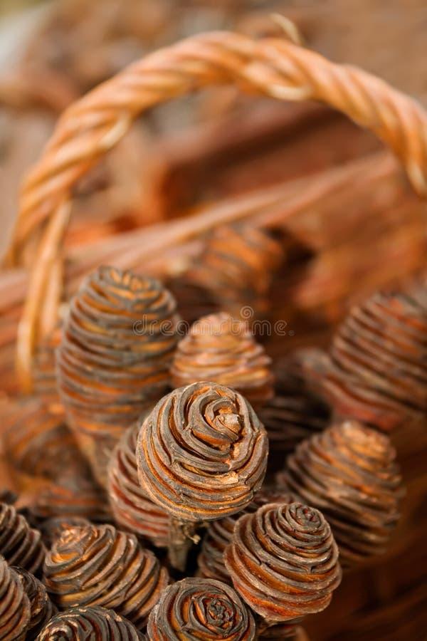 Macro de grãos do pinho marrom com cesta fotos de stock royalty free