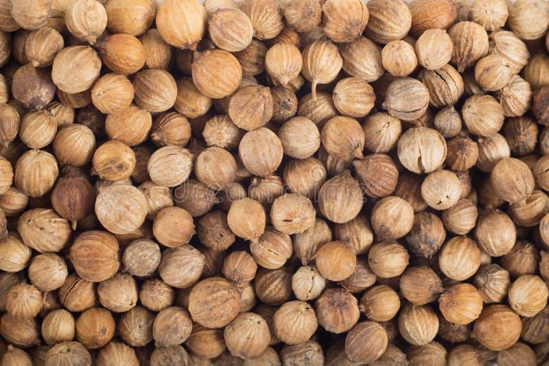 Macro de graine de coriandre photos stock