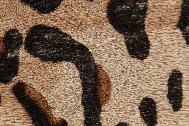 Macro de la alfombra de la piel foto de archivo