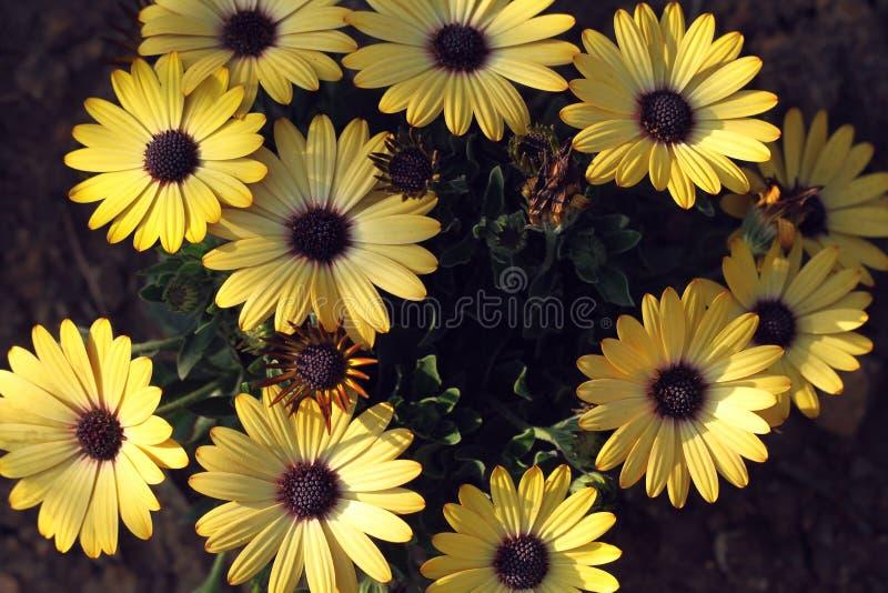 Macro de la flor amarilla rosada fotos de archivo libres de regalías