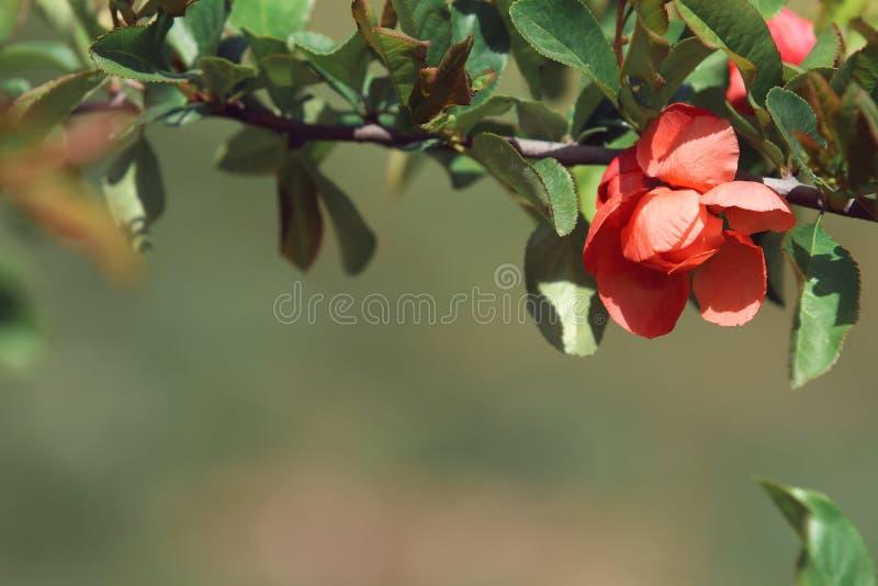 Macro de la flor anaranjada fotografía de archivo