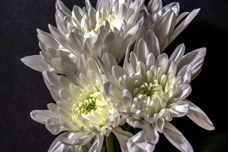 Macro de la flor blanca fotografía de archivo libre de regalías