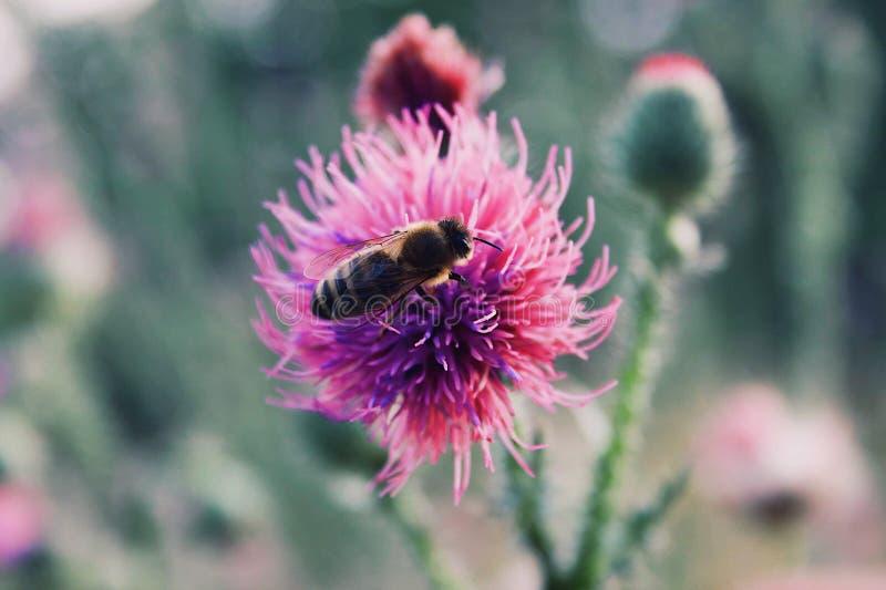 Macro de la flor y de la abeja de la primavera foto de archivo libre de regalías