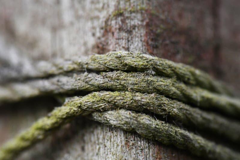 Macro de la guita cubierta de musgo en una cerca Post imágenes de archivo libres de regalías