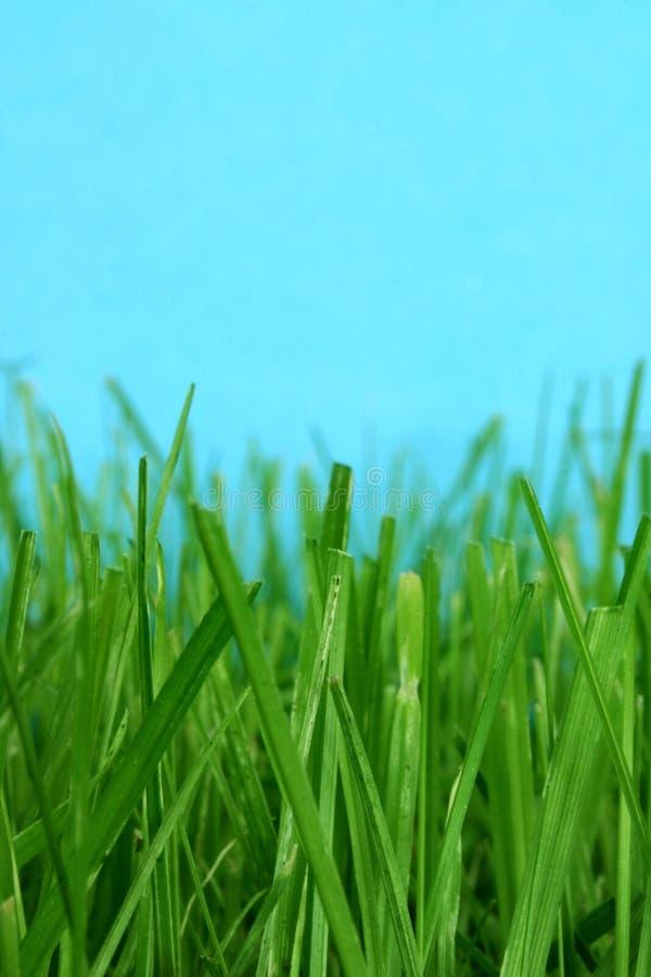 Macro de la hierba imagenes de archivo