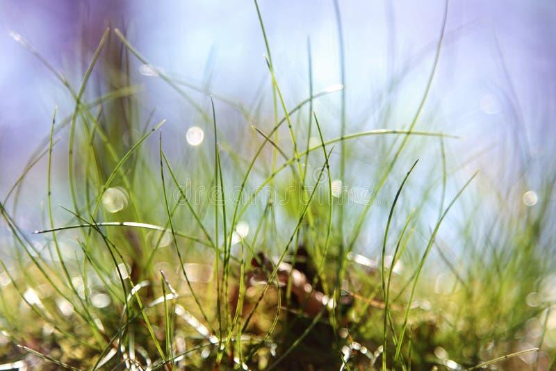 Macro de la hierba imágenes de archivo libres de regalías