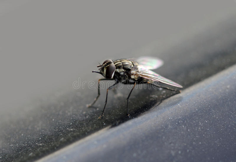 Macro de la mosca fotografía de archivo