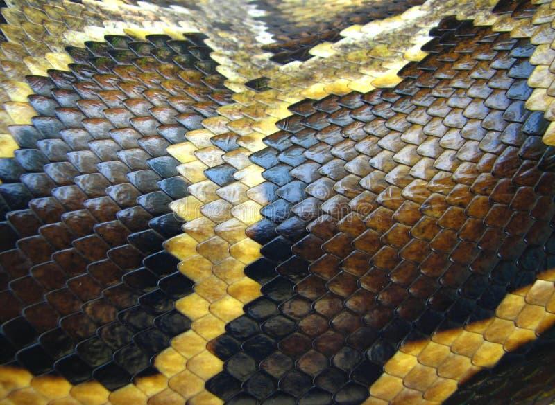 Macro de la piel de serpiente imagenes de archivo