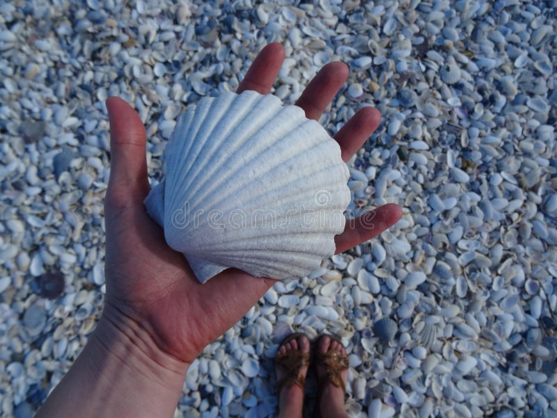 Macro de la playa del berberecho fotos de archivo libres de regalías