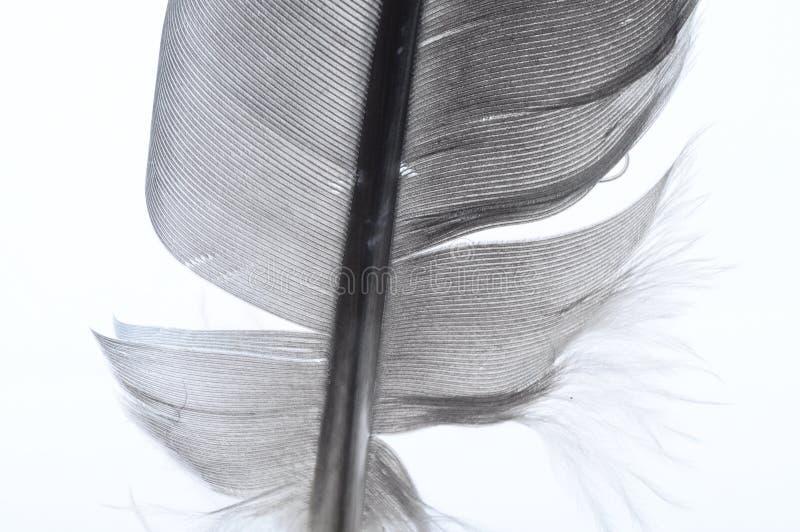 Macro de la pluma blanco y negro fotos de archivo
