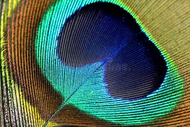 Macro de la pluma de cola del pavo real fotografía de archivo libre de regalías