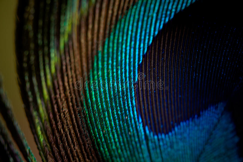 Macro de la pluma del pavo real fotos de archivo