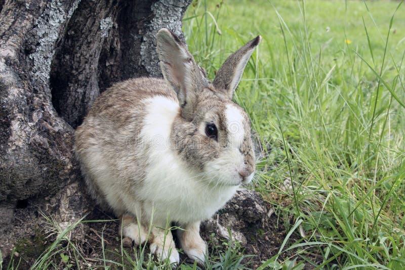 Macro de lapin en parc images stock