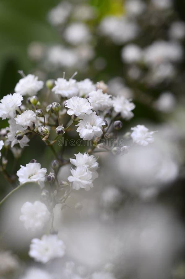 Macro de las flores blancas fotografía de archivo libre de regalías