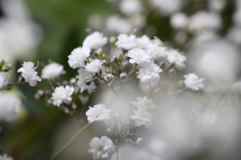 Macro de las flores blancas imágenes de archivo libres de regalías